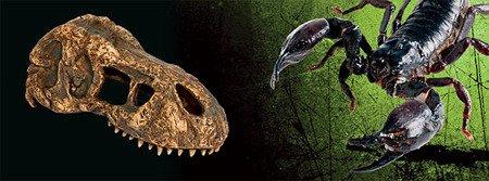 Exo Terra T-Rex Skull - Mini czaszka dinozaura 15 x 7 x 7 cm