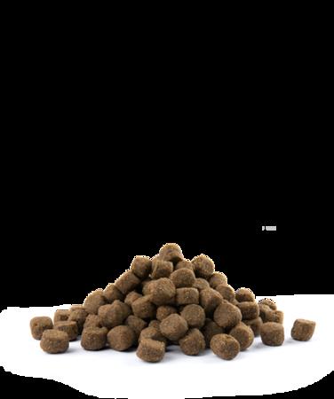 VERSELE-LAGA Opti Life Adult Digestion Medium & Maxi 12,5 kg - karma dla dorosłych psów ras średnich i dużych z wrażliwym układem pokarmowym ( jagnięcina )